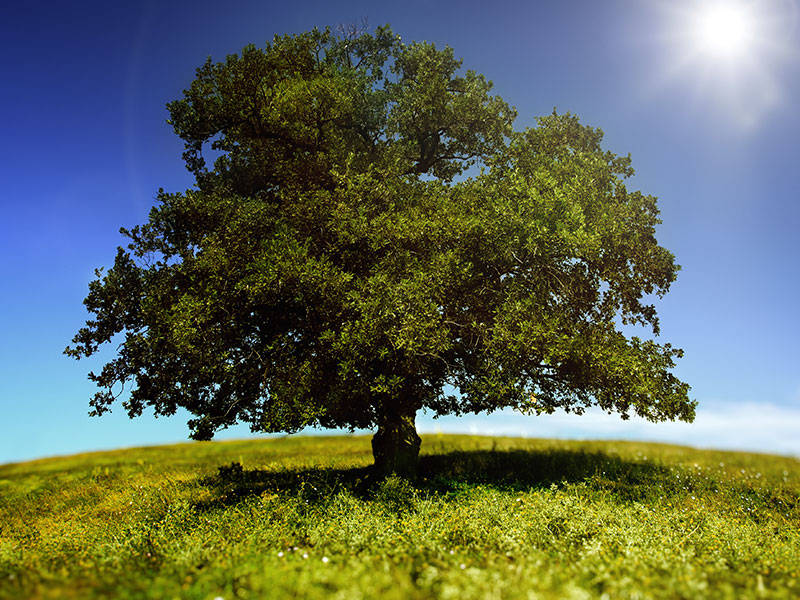 How Trees Can Impact HVAC Efficiency
