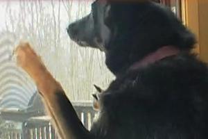 Pets & Critters   Guaranteed Pet Proof Screens