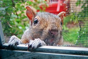 Pets & Critters   Critter Guard: Vandal & Pest Barriers