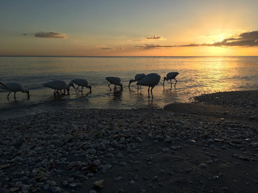 Sunset on Sanibel Island November 2019