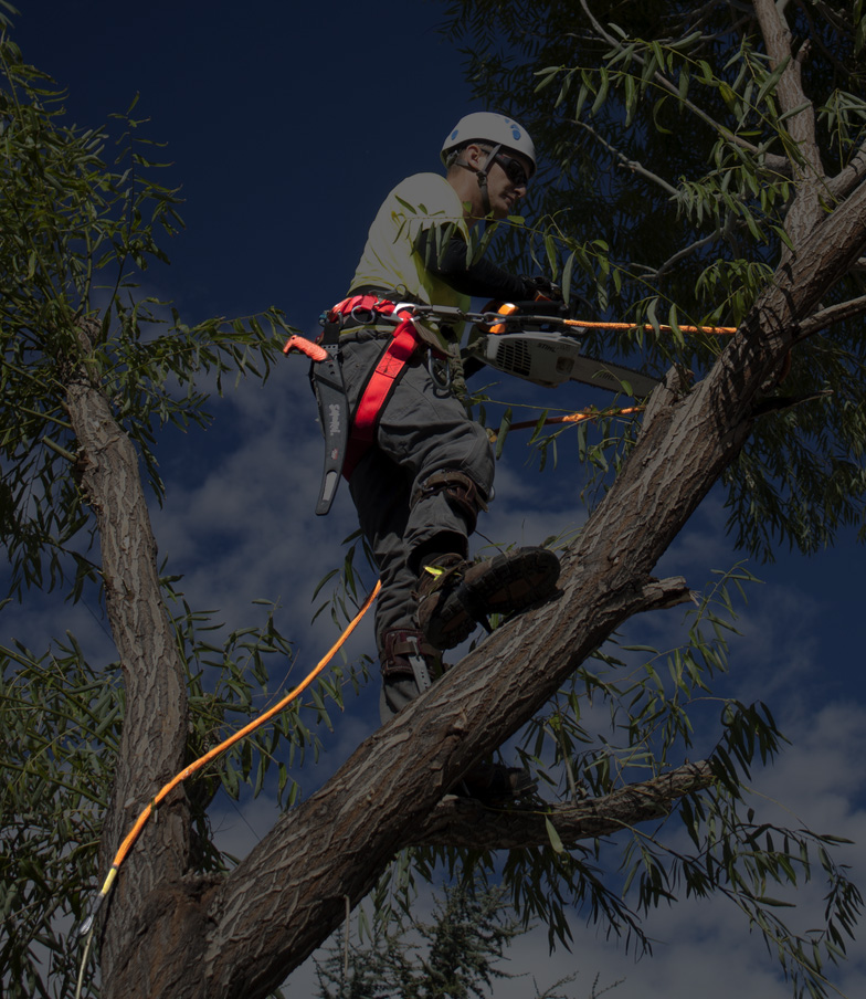 Riverside Tree services