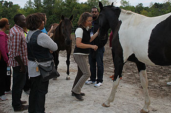 Creating-Pathway-Farms–Equine-Assisted-Learning-page-01