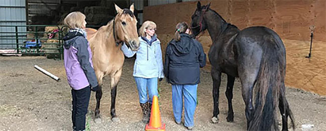 Creating-Pathway-Farms-Equine-Assisted-Learning-02
