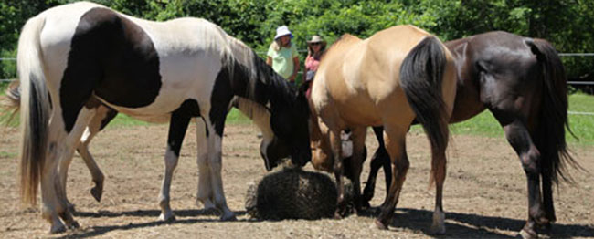 Creating-Pathway-Farms-Equine-Assisted-Learning-05