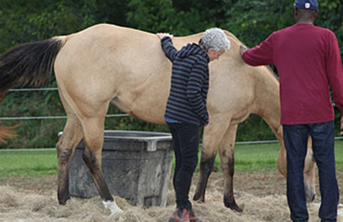 our-horses—diva