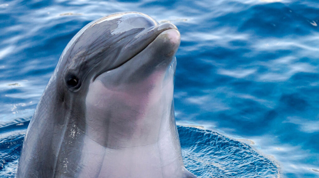 A dolphin head poking out of the water