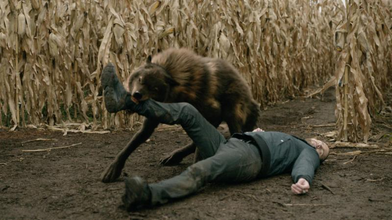 SyFy Biten Wolf on Leg
