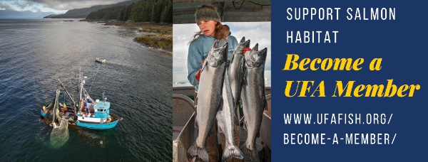 We've been busy promoting healthy salmon habitat