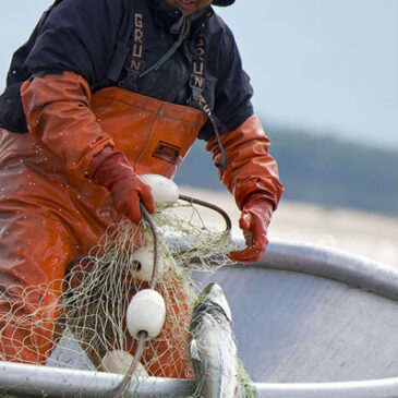 Recent Survey of Independent Alaskan Fishermen Reveals Priorities