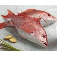 Red Snapper / Chempalli / Rane (Large) (2.5kg to 6.5kg)