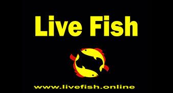 Live Fish Exclusive