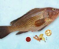 Grouper / Reef Cod / Kalava (Large) (800g to 1.5kg)
