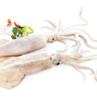 Squid / കൂന്തൽ