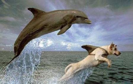 Feel the magic of the Dolphin Energy