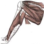 rotator cuff injury -Gray412