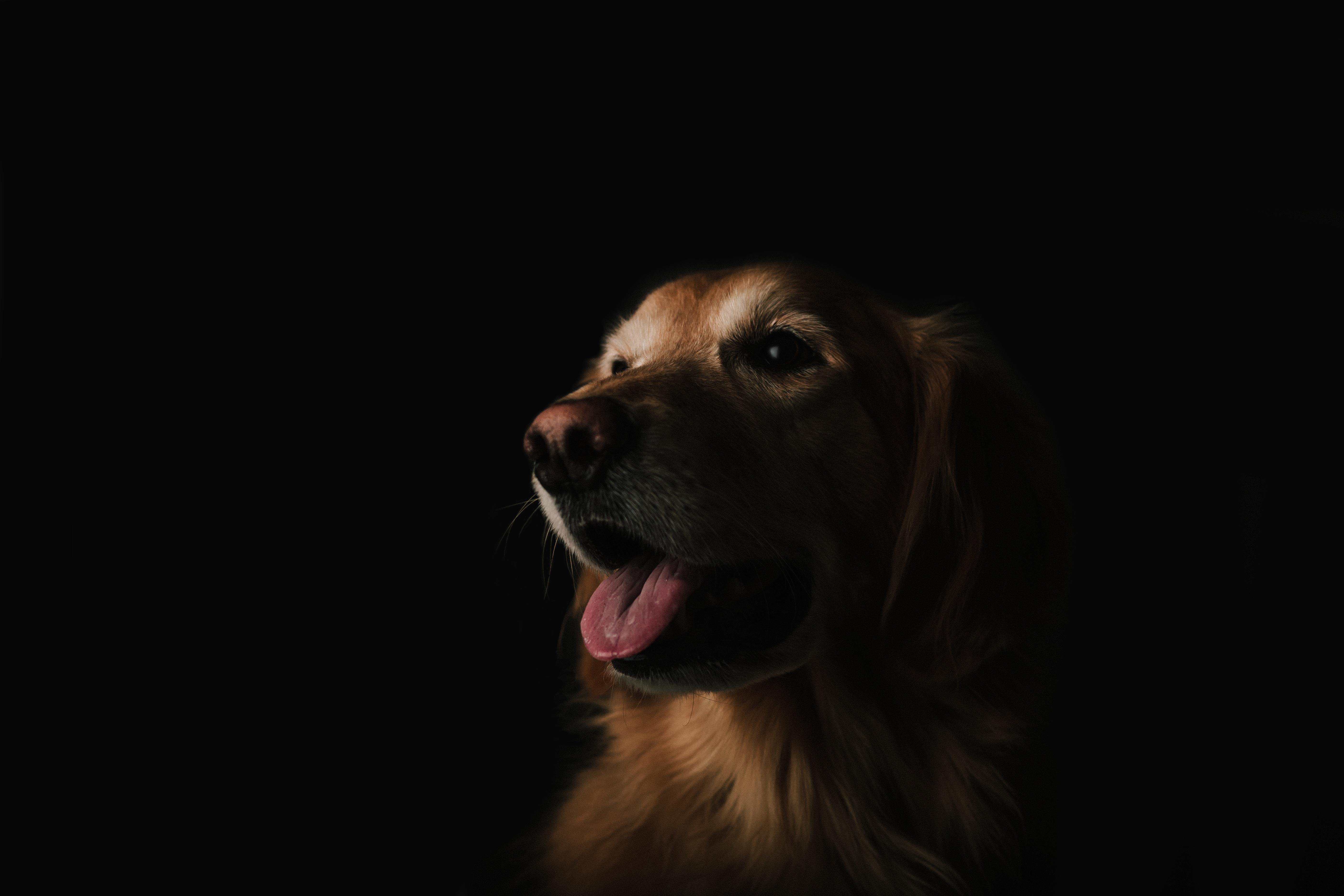 dog bite case