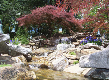 Japanese Maple Waterfall