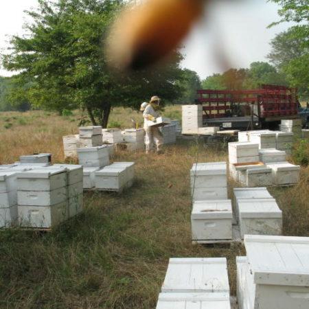 hummer_hives