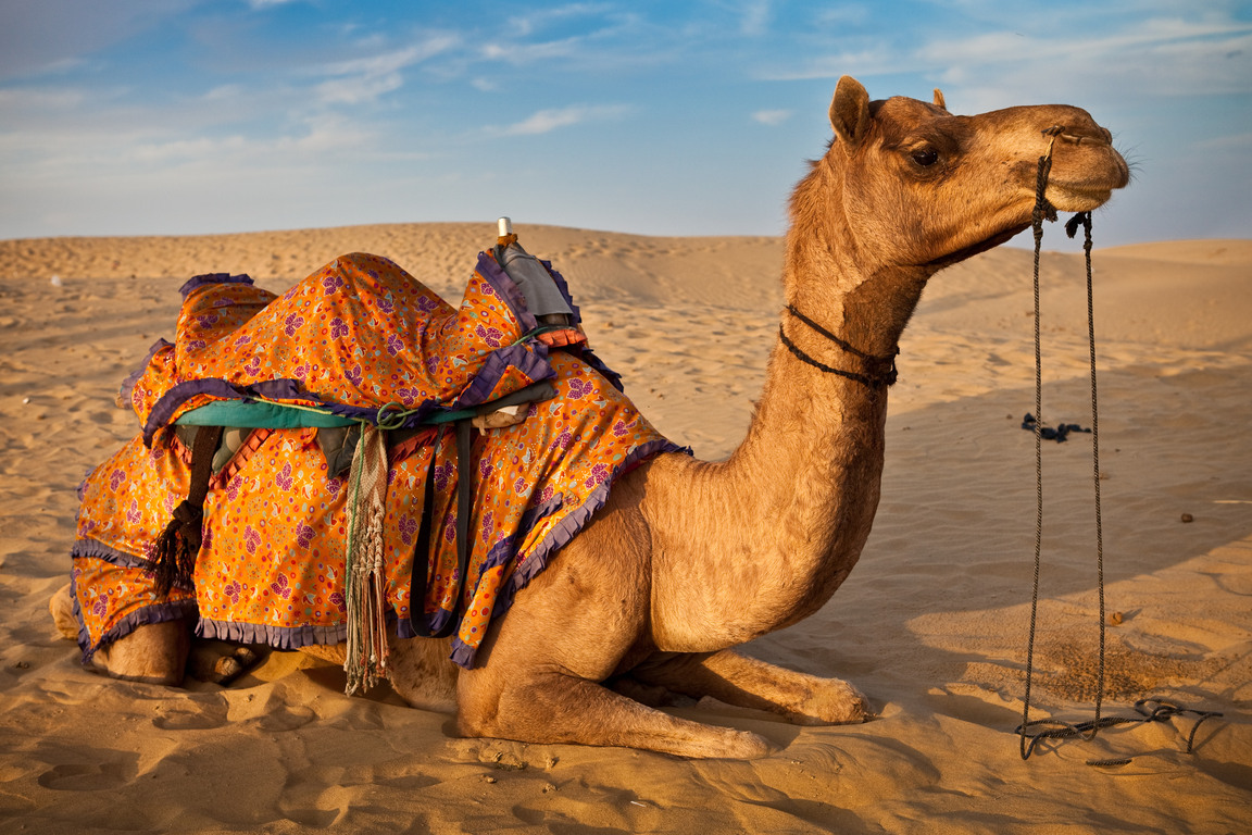 Thar: A Desert Of Pain and Serenity