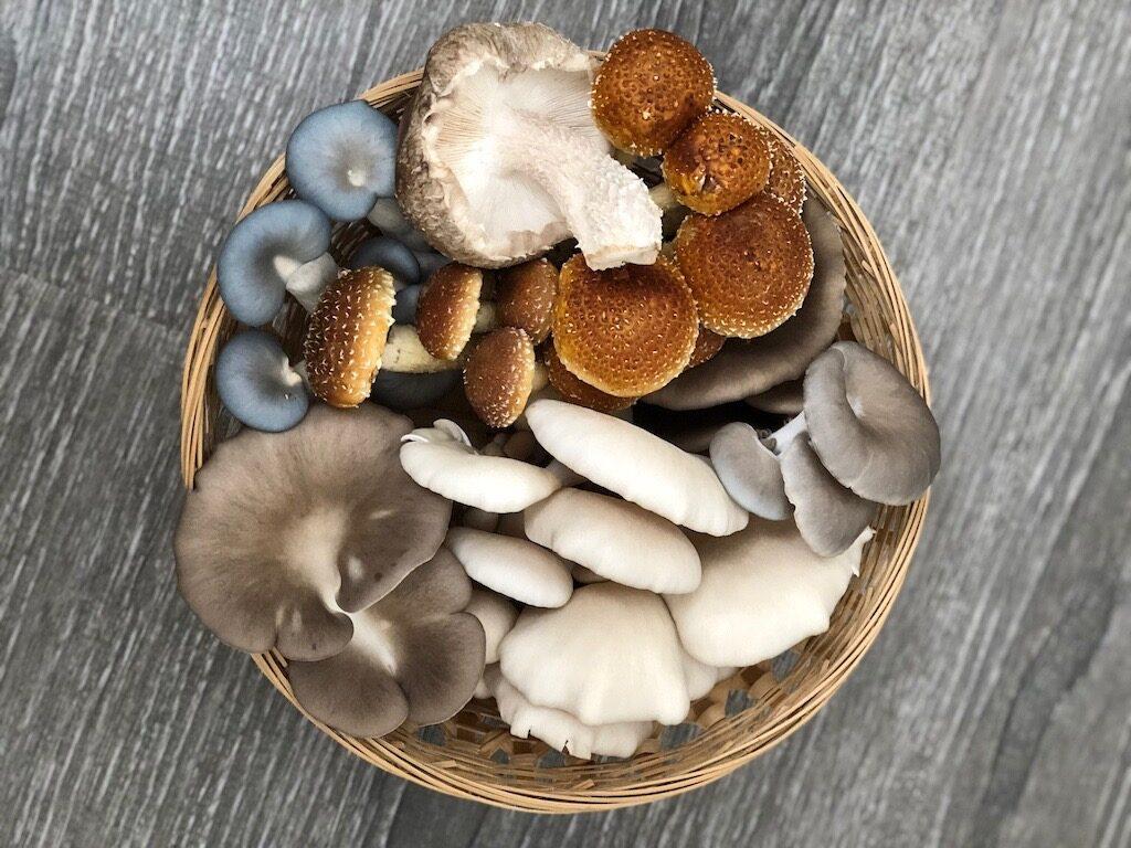 fresh fungi basket