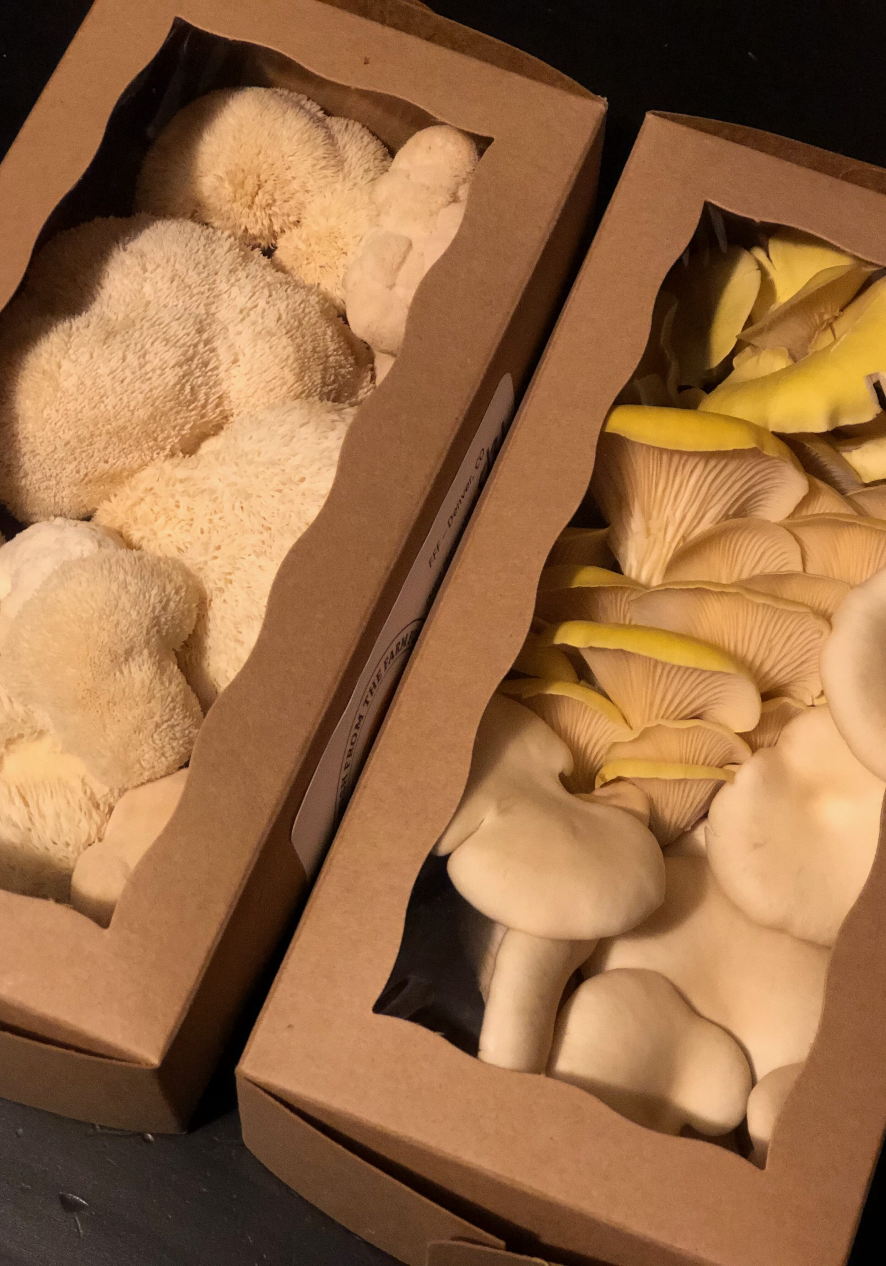 Oyster mushrooms and lIons mane mushrooms fresh from the farm fungi