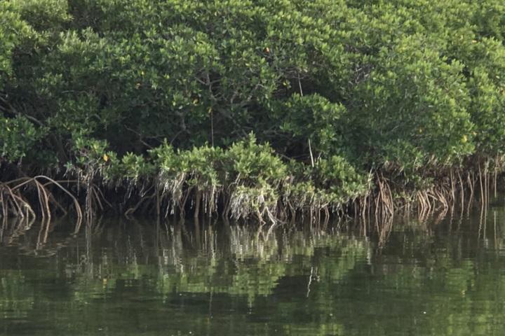 Homosassa River Restoration