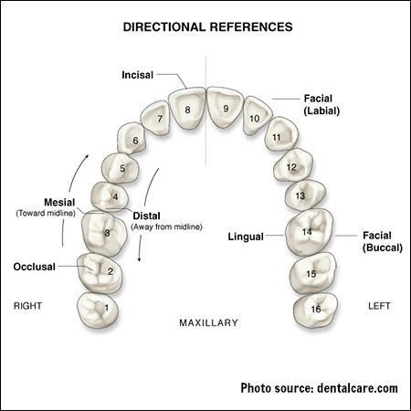 Surfaces of the teeth diagram
