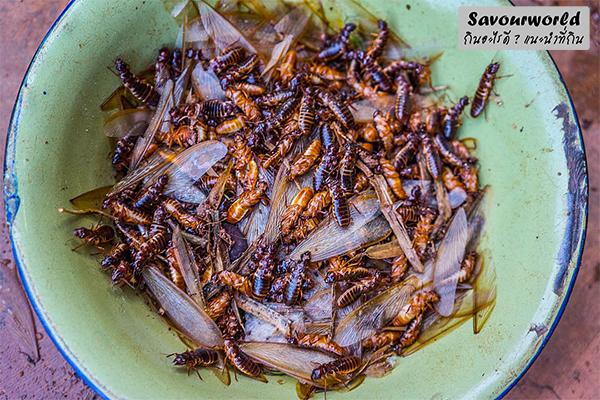 แมลงเม่ากับประโยชน์ทางโภชนาการ กินอะไรดี เมนูอาหาร ร้านอาหารอร่อย Nightlife รีวิวคาเฟ่ ร้านอาหาร-คาเฟ่ ที่กิน-ที่พัก แนะนำร้านอาหาร อาหาร-สุขภาพ savourworld.com อาหารจากแมลงเม่า