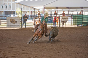 What makes a Versatility Ranch Horse?