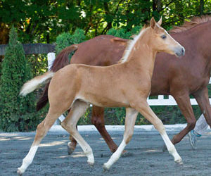 2020 Foals Arriving this Spring!