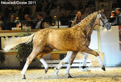 2018 – Quasi Gold – Foal Sold