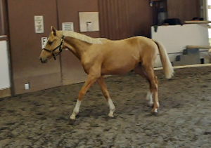 Golden Opportunity Yearling web 300
