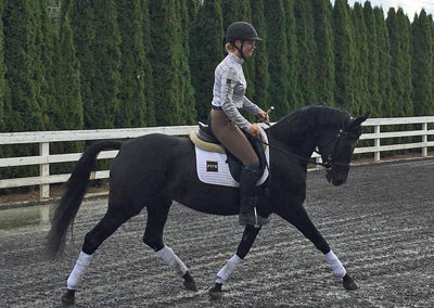 Sheeza trot under saddle2 400