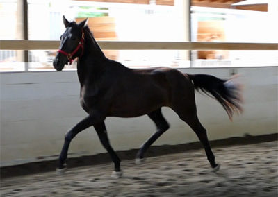 Fortuitous trot1 450