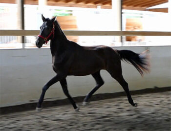 Fortuitous trot2 450