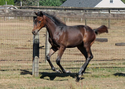 Hot to Trot Foal Canter 450