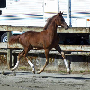 Fanciful Trot Mare 1 300