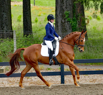 Elusive Wild Card Canter 350 at Show 1