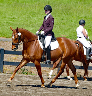 Elusive Wild Card Trot 300 at Show 1