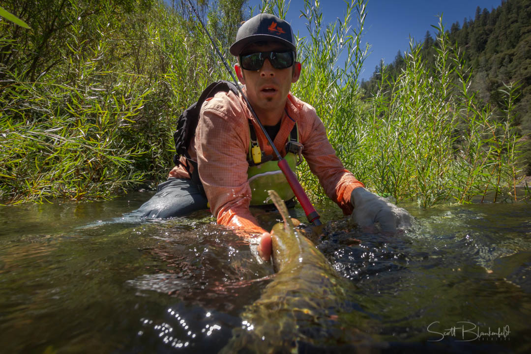 Robby Hogg in Drought Trout Willows, By Scott Blankenfeld