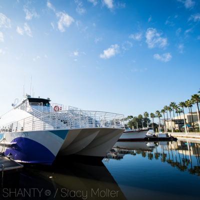 Winter of Whales – Whale Watching in Long Beach