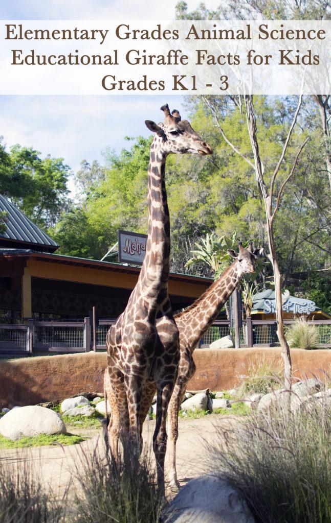 Educational Giraffe Facts for Kids
