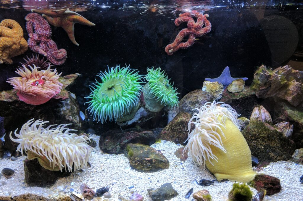 Carbrillo Marine Aquarium
