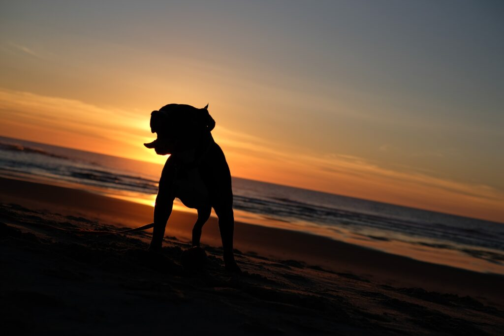 Best Dog Friendly Beaches in California