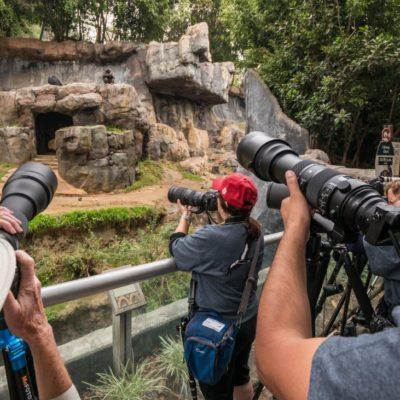 Photo Day at the LA Zoo