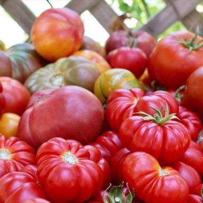 Tomatomania 2019