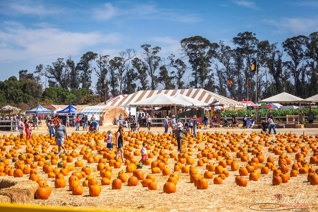 22nd Annual Fall Harvest Festival