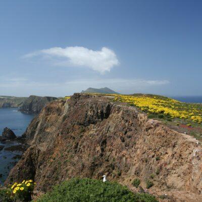 Anacapa Island: Celebrate the Wildflowers