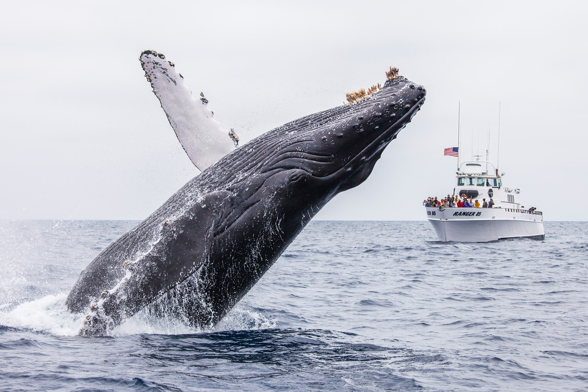 23rd Annual Celebration of the Whales