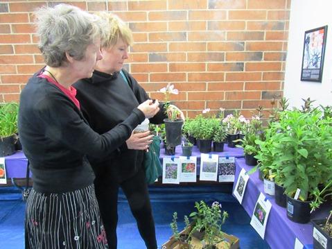 Master Gardeners Plant Sale